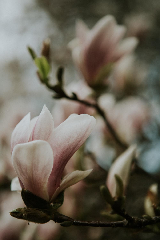 pink and white flower in tilt shift lens