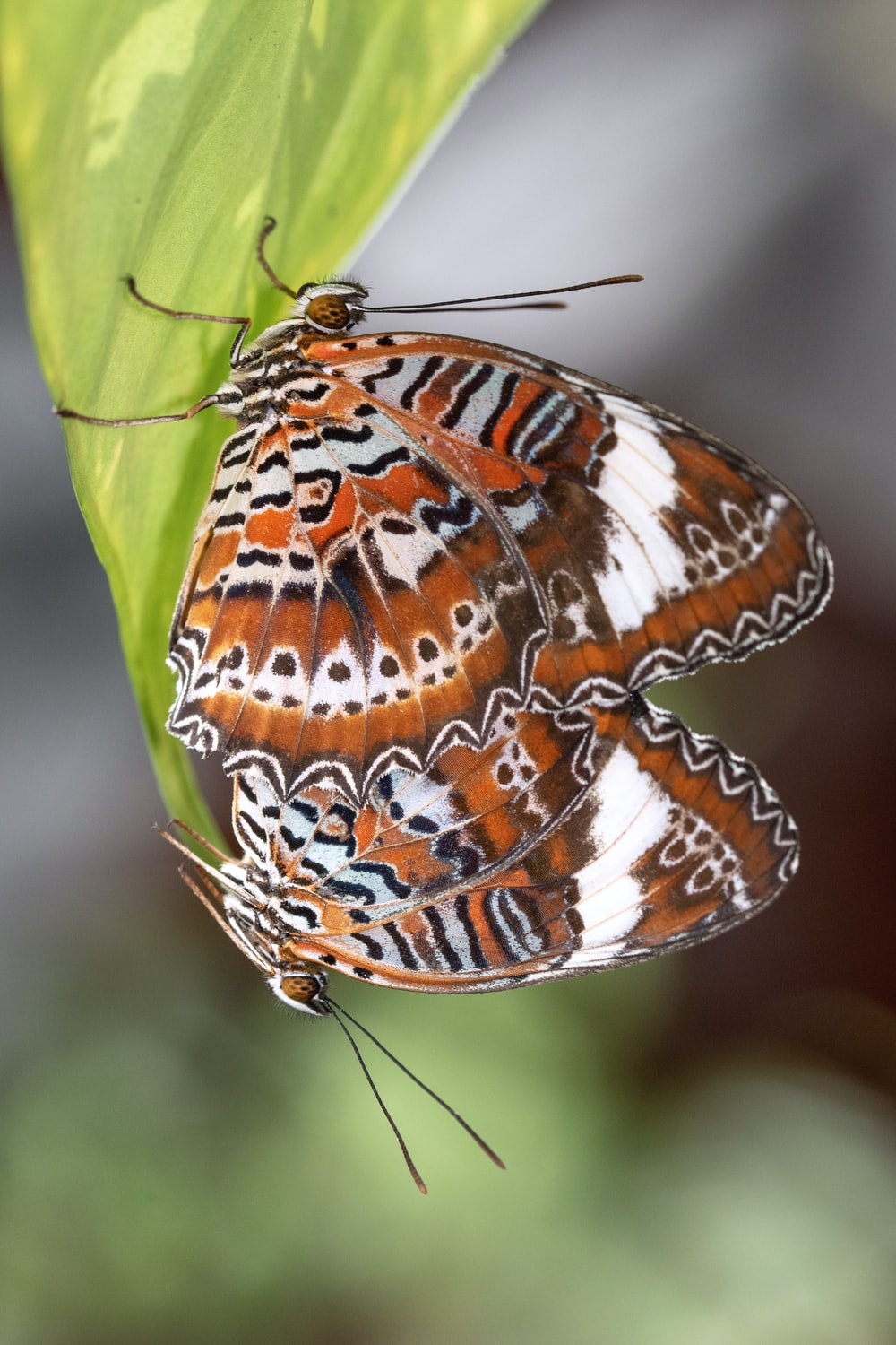 brown and white butterfly perched on green leaf in close up photography during daytime