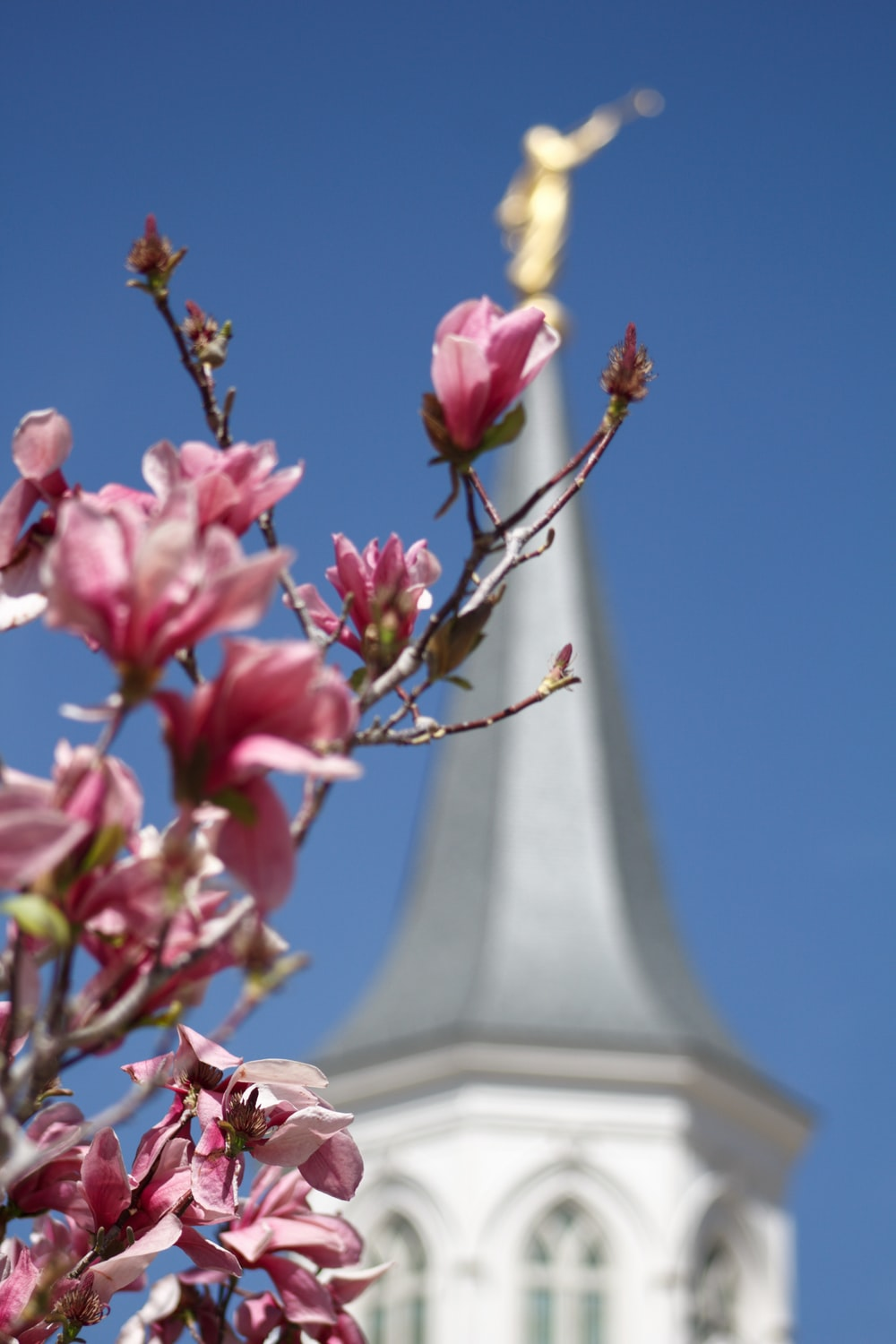 pink flowers near white concrete tower during daytime