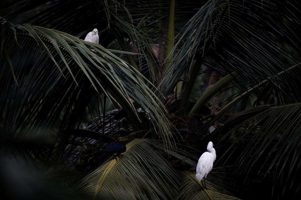 white bird on green palm tree