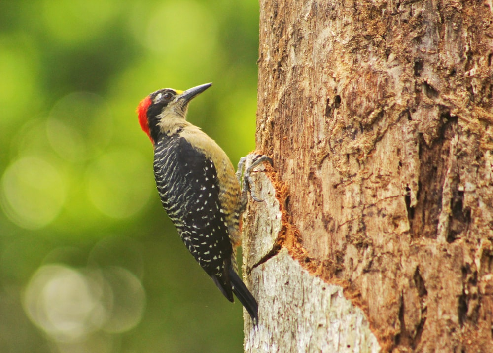 black yellow and red bird on brown tree trunk during daytime