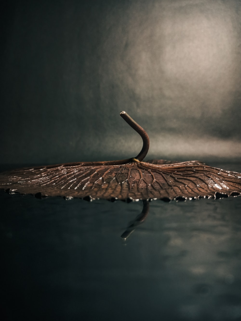 brown leaf on water during daytime