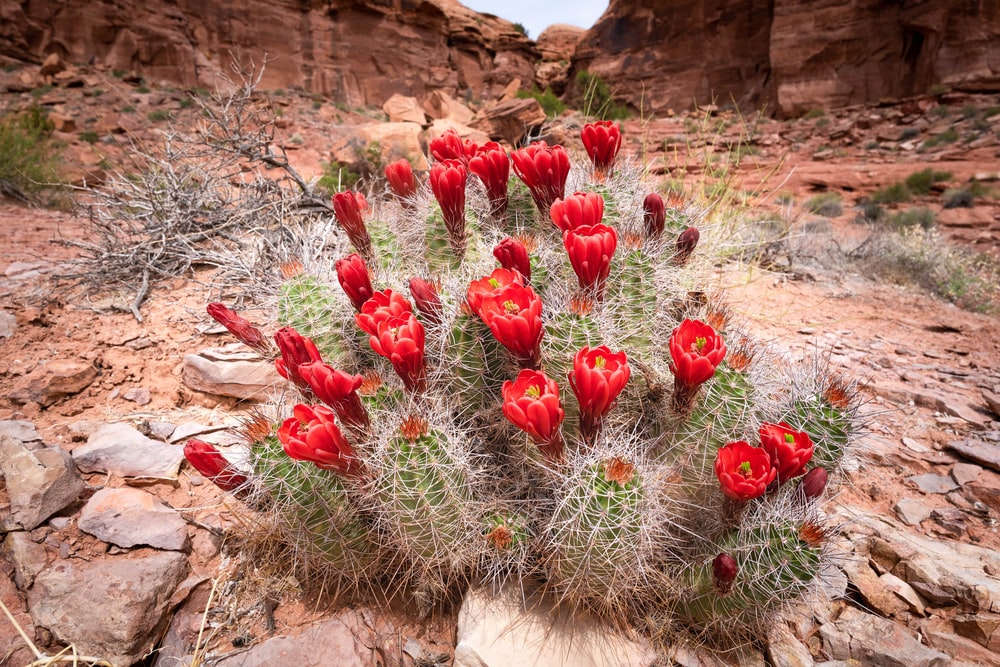 red flowers on brown rock