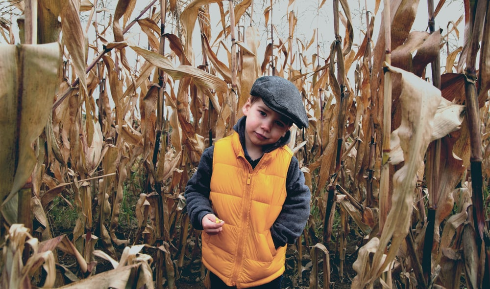 boy in yellow and gray jacket standing in corn field during daytime