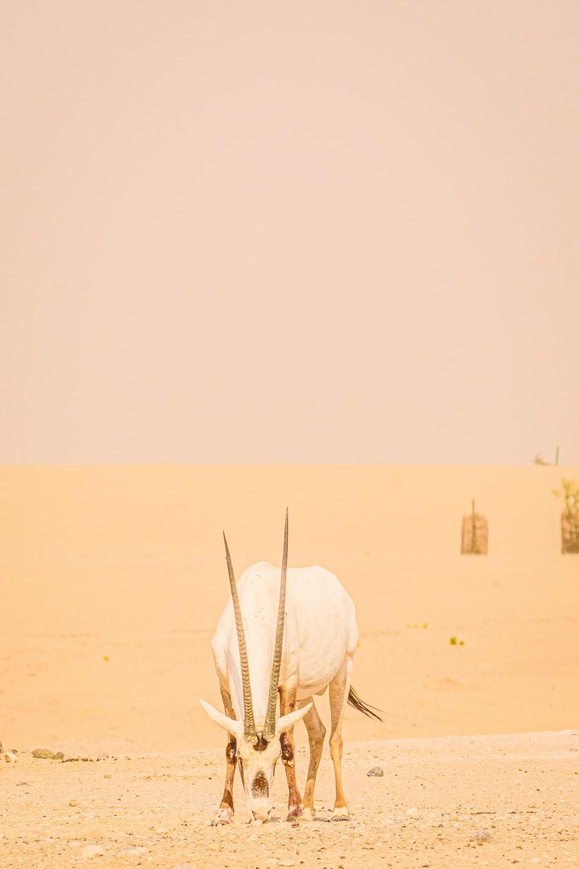 white animal skull on brown sand during daytime