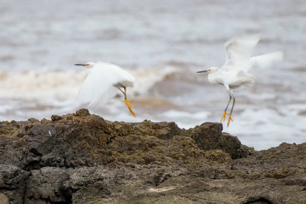 white bird on brown rock during daytime