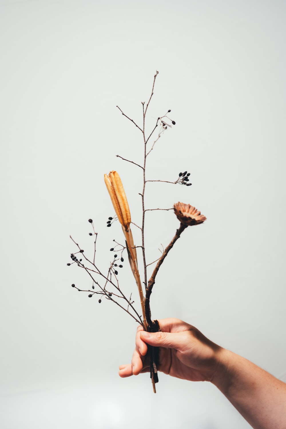person holding brown dried flower