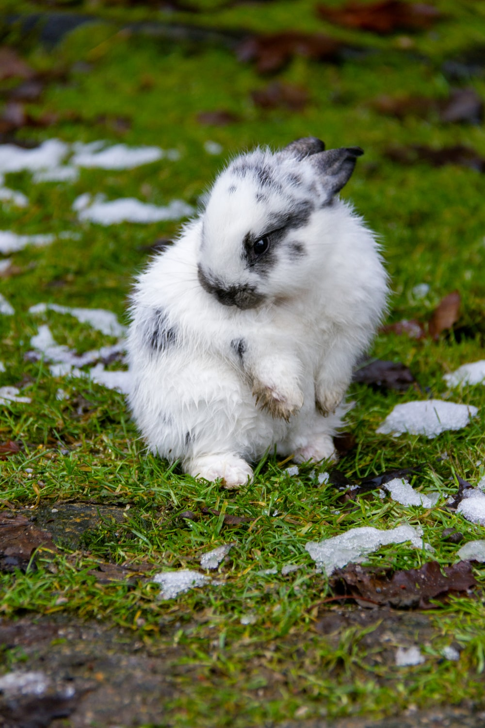 white and gray rabbit on green grass