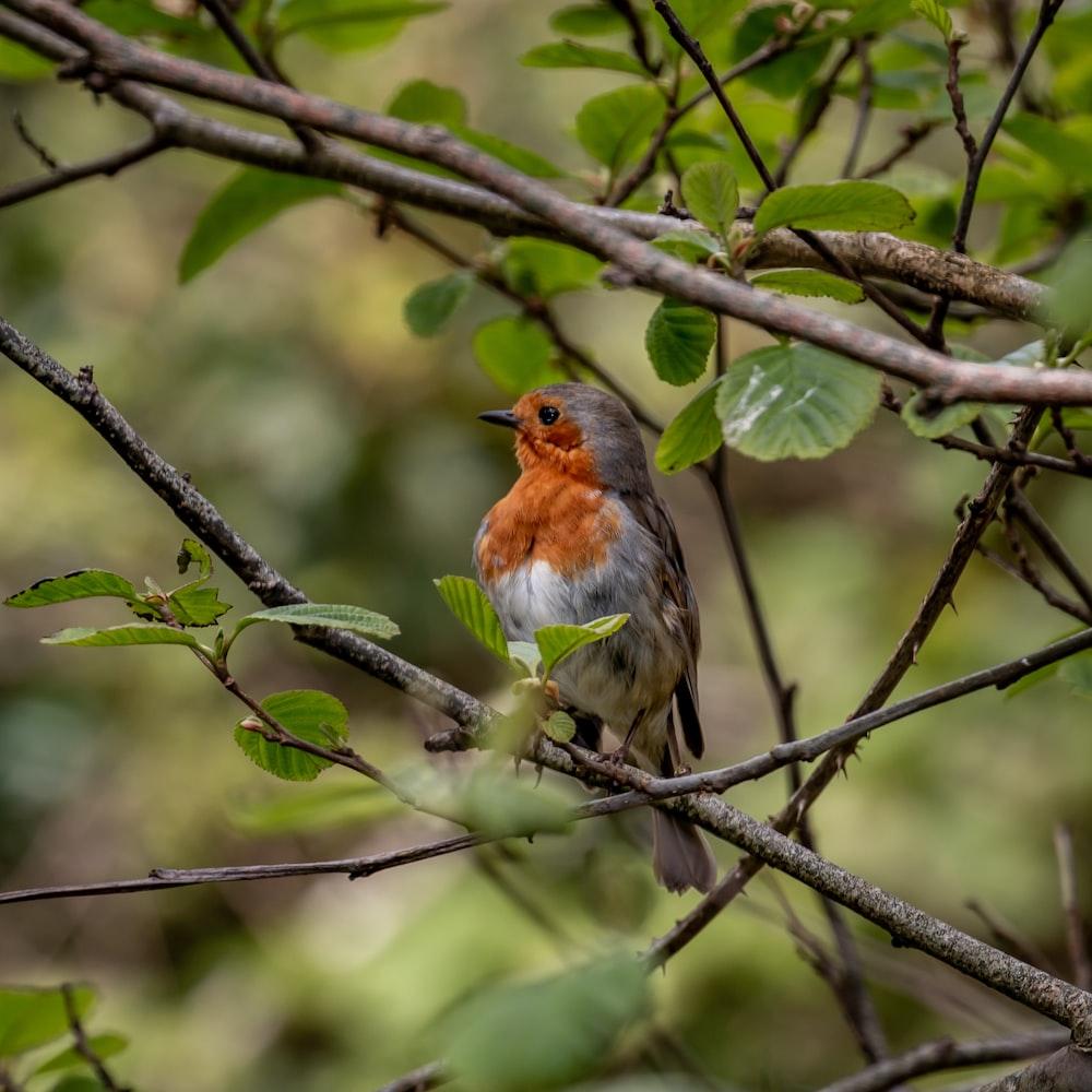 brown and orange bird on tree branch during daytime