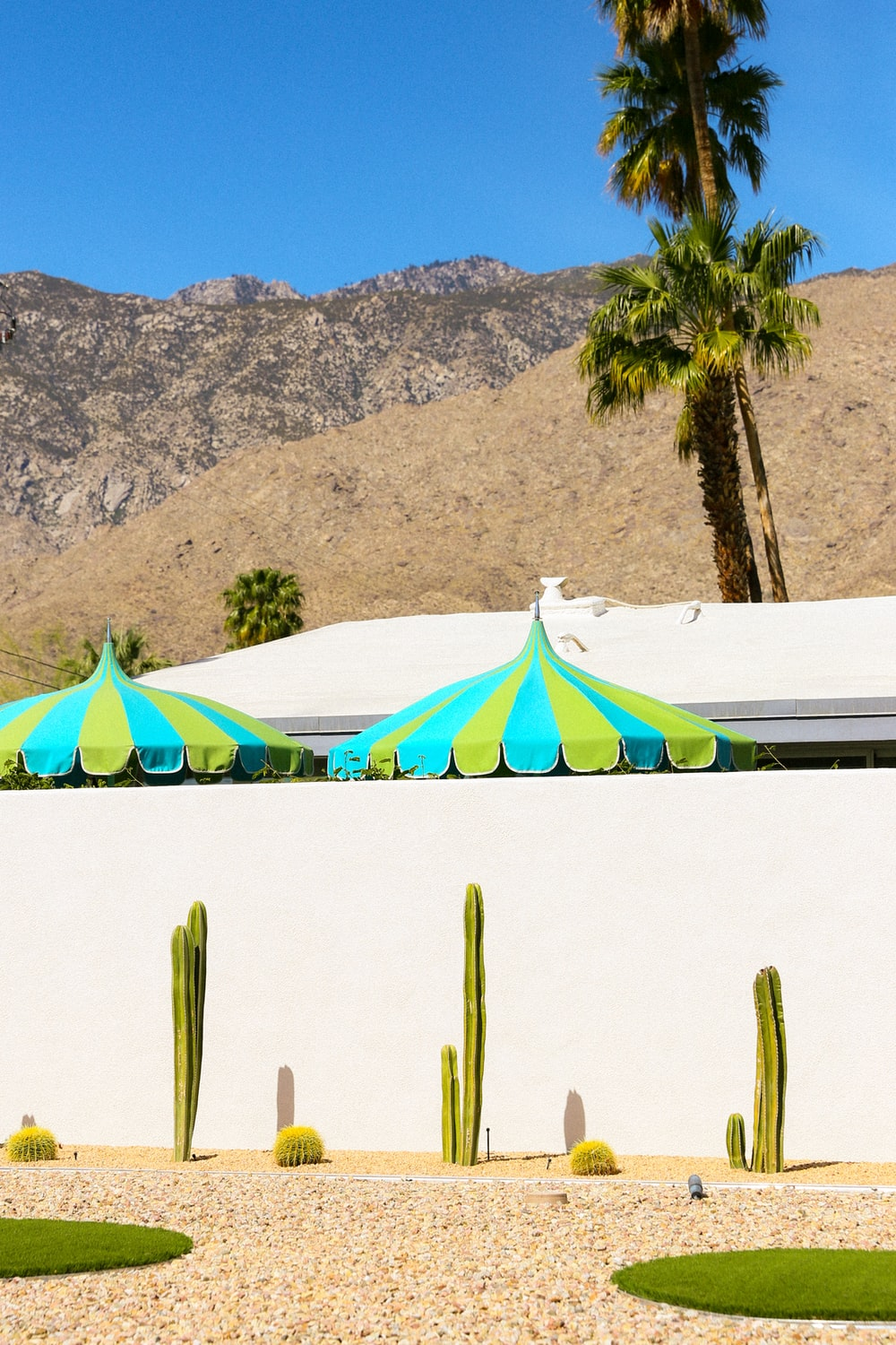 green palm trees near white and blue beach umbrellas during daytime