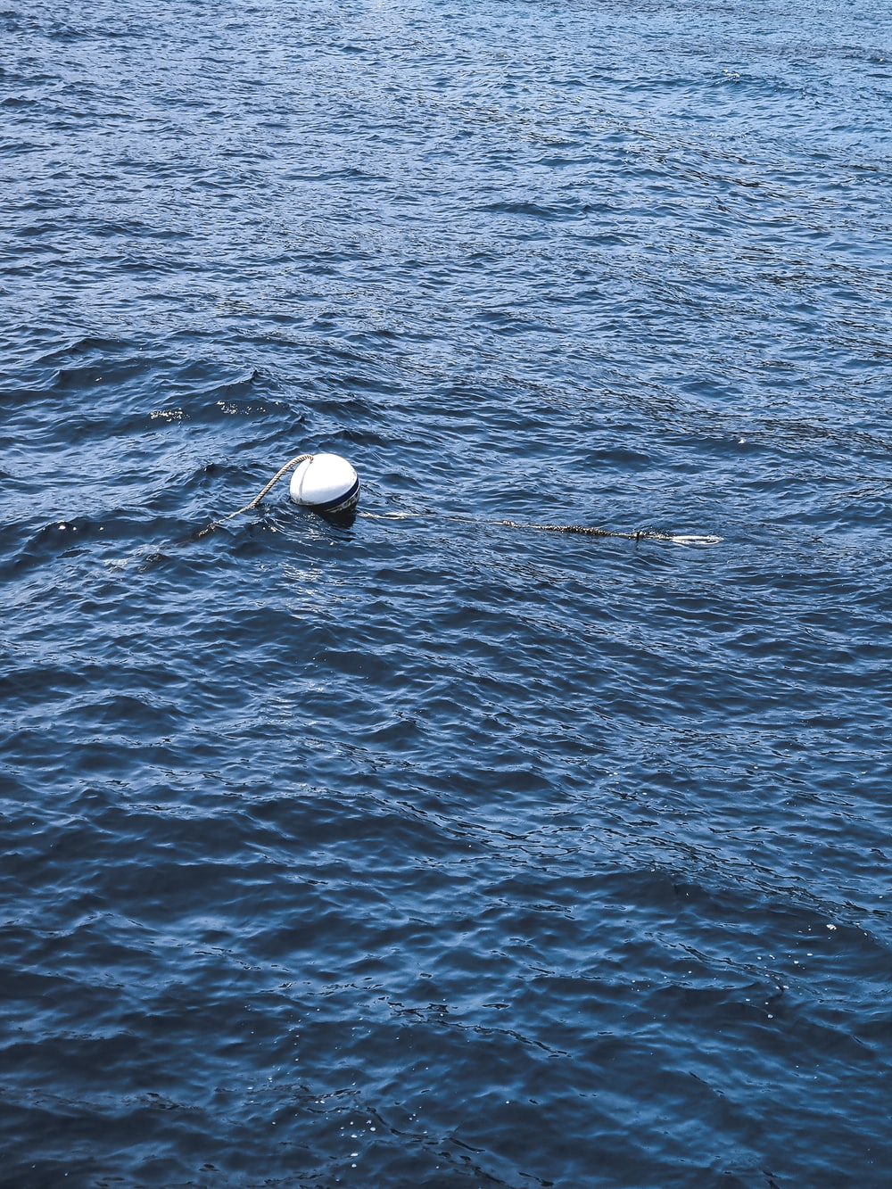 white and black ball on water