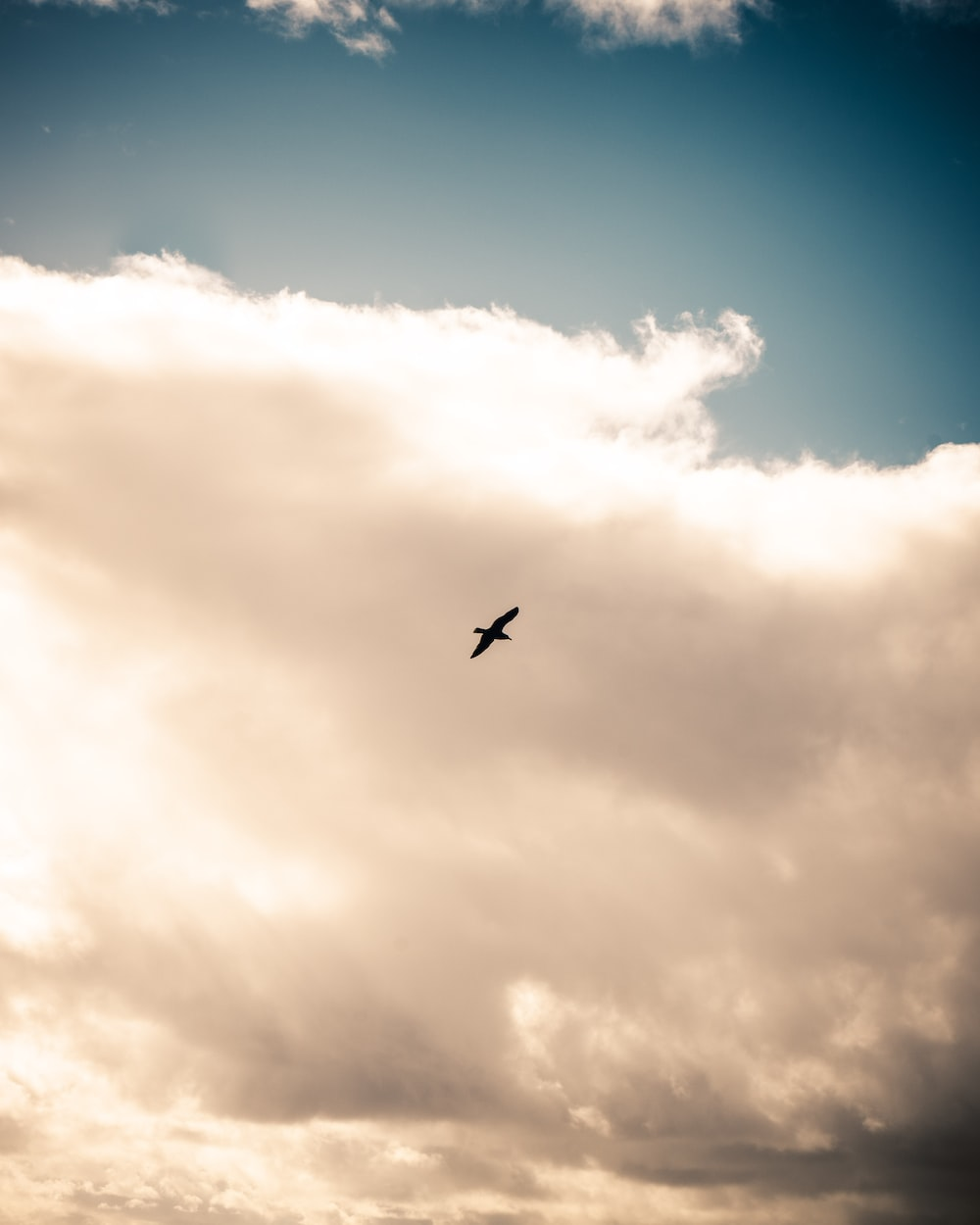 silhouette of bird flying under white clouds during daytime