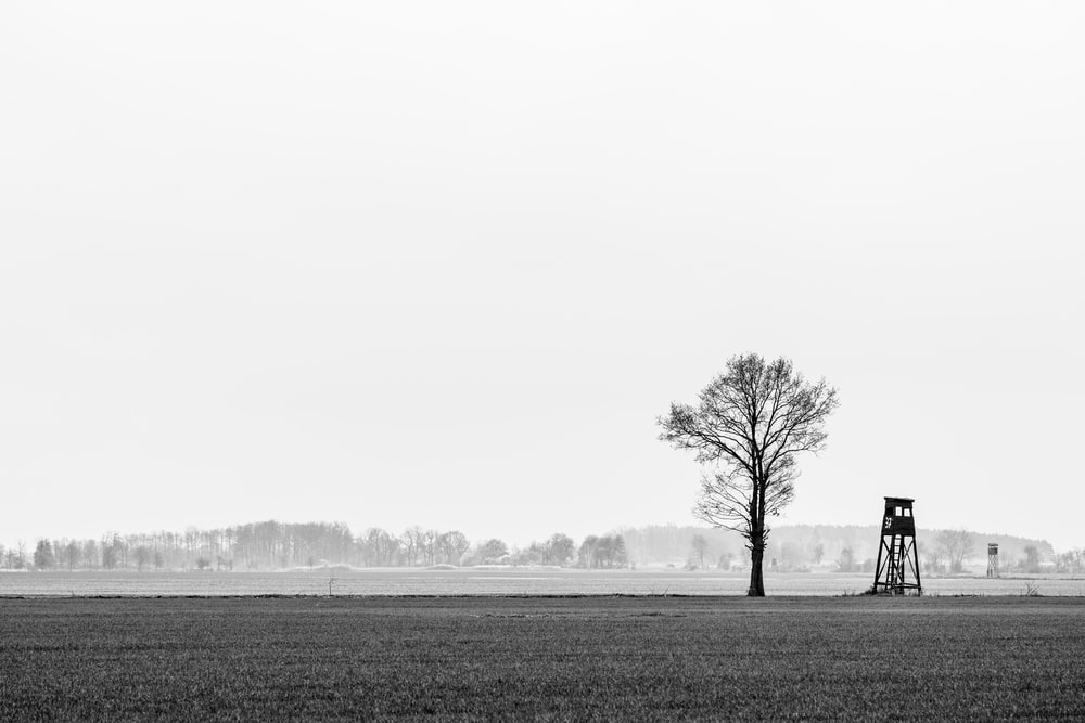 bare tree on grass field during daytime