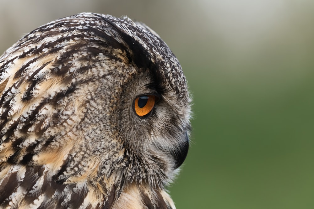 brown and black owl in close up photography during daytime