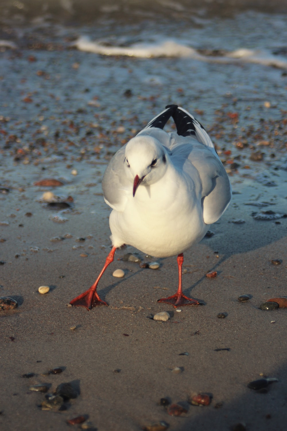 white and black bird on brown sand during daytime