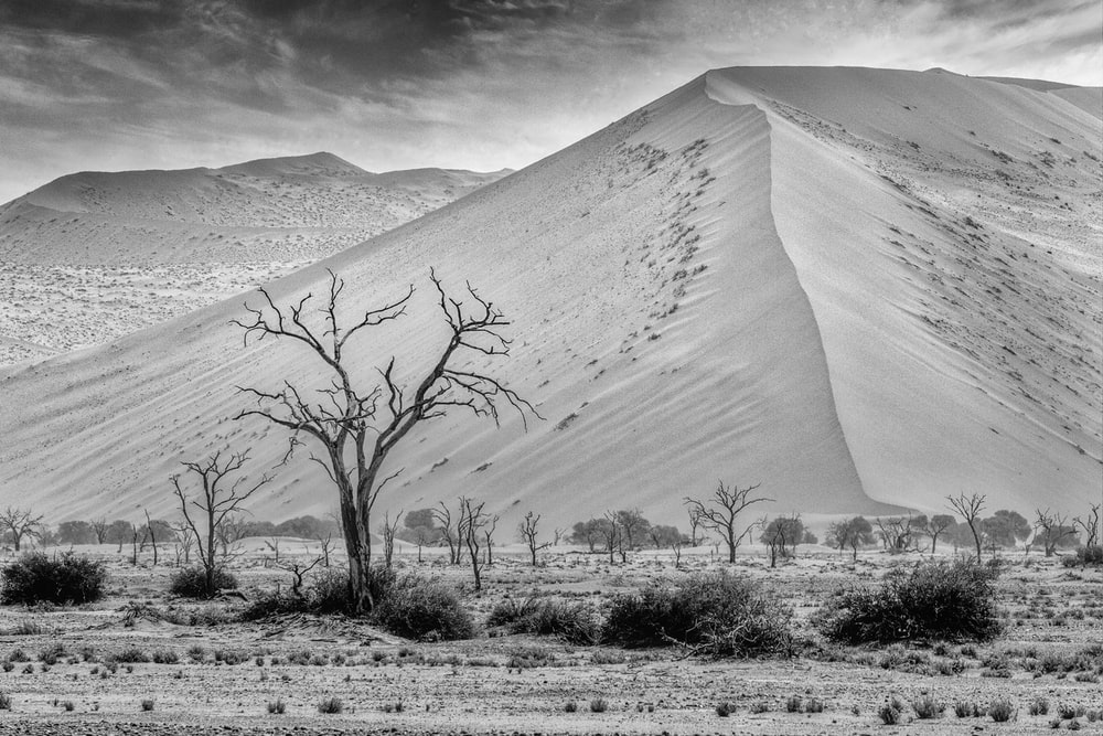 grayscale photo of leafless tree on desert