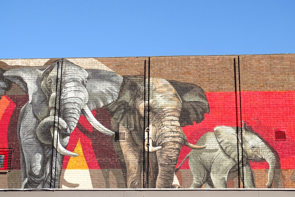 elephant and elephant wall art