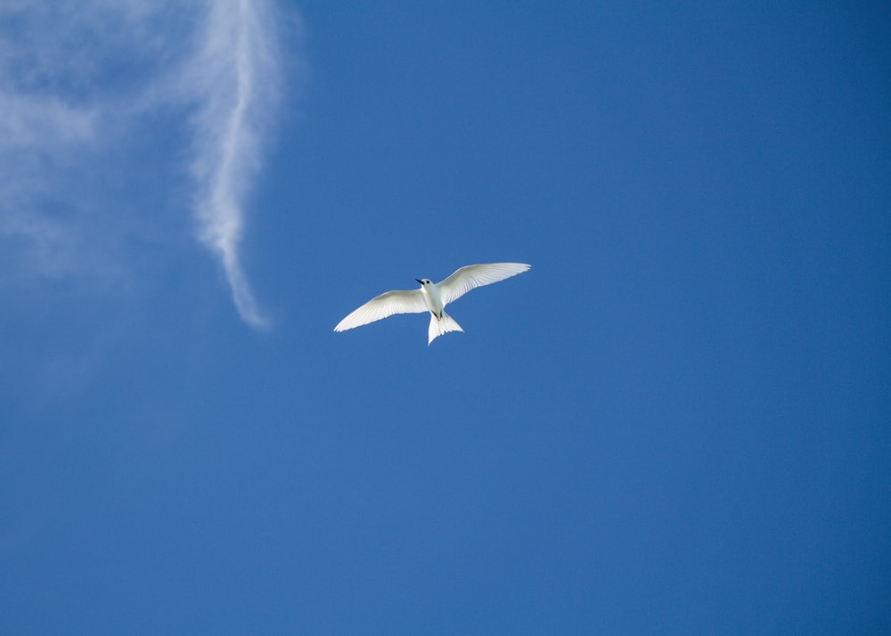 white bird flying in the sky during daytime