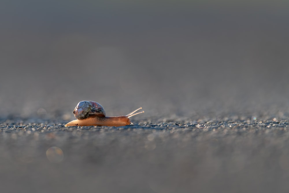 blue and brown snail on gray sand