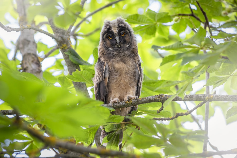 brown owl on tree branch during daytime