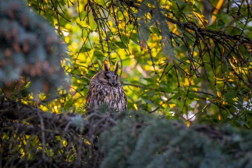 brown owl on green tree during daytime