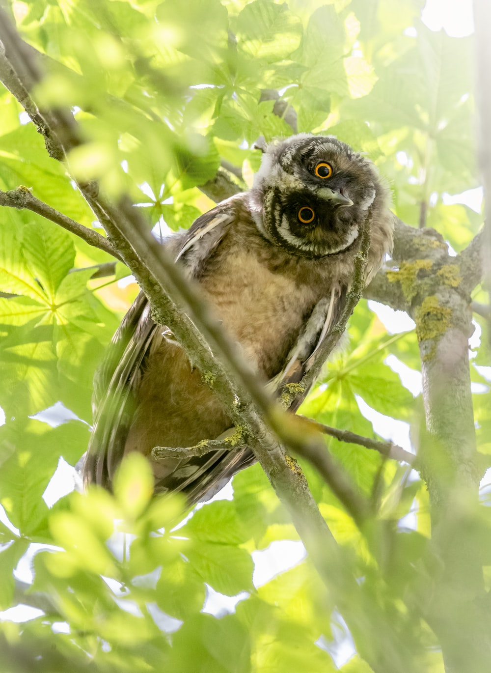 brown and black owl on tree branch