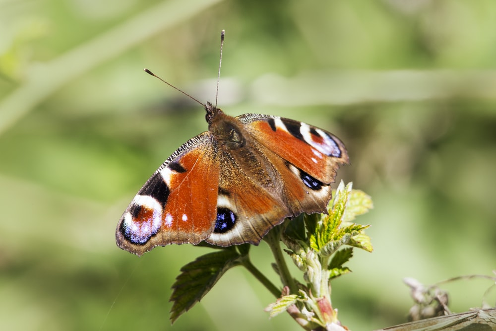 brown white and black butterfly perched on green plant during daytime