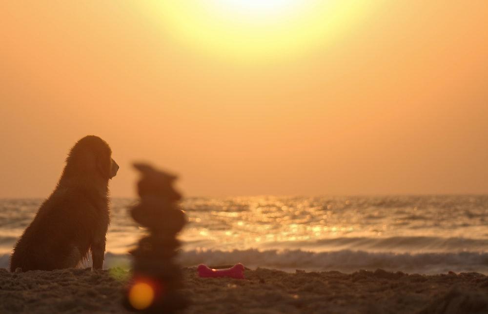 golden retriever sitting on beach shore during sunset