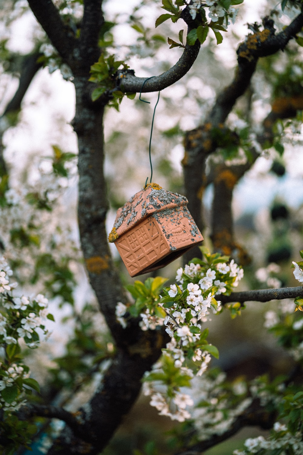 brown wooden bird house hanging on tree branch during daytime