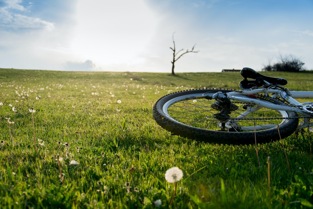 bicycle wheel on green grass field during daytime