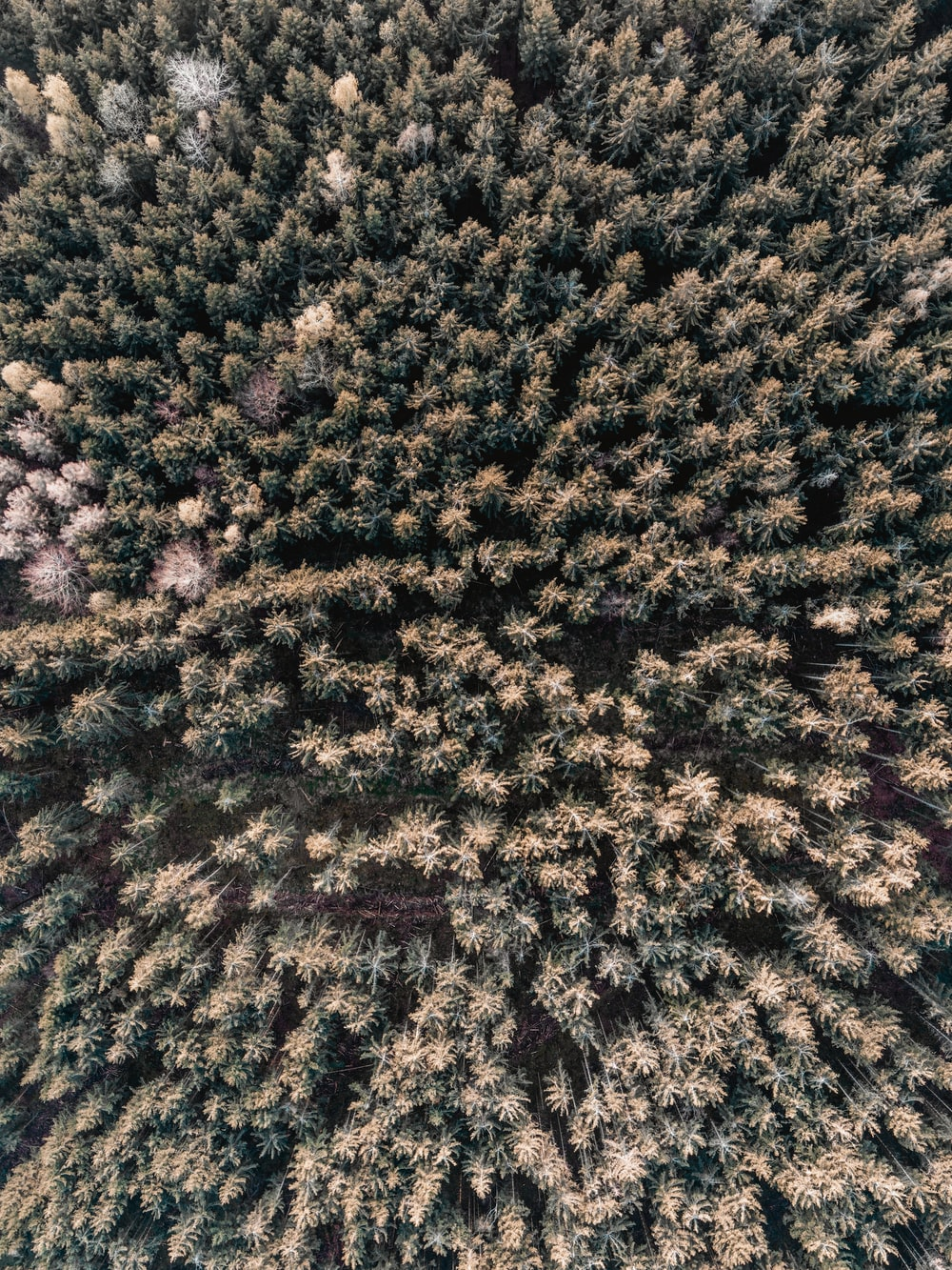 aerial view of forest during daytime