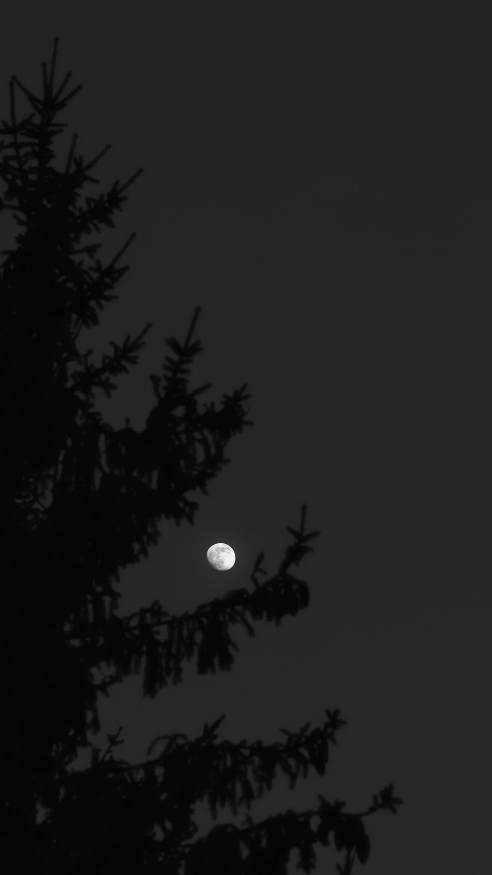 full moon over trees during night time