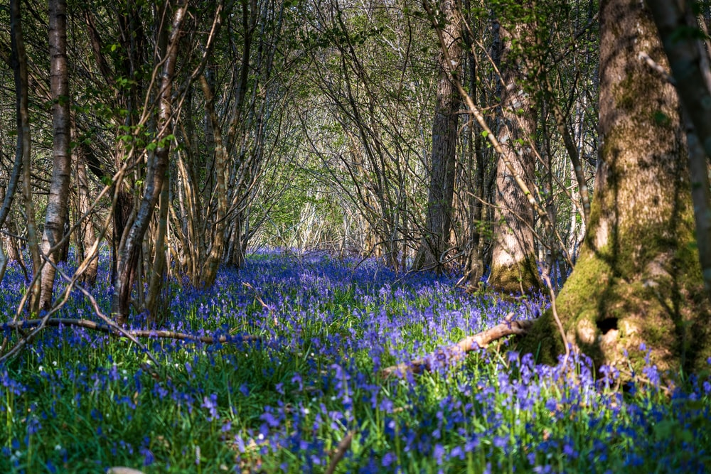 blue flower field with brown tree trunk