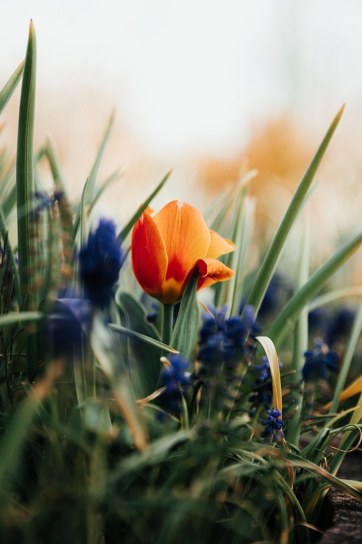 orange flower on green grass during daytime