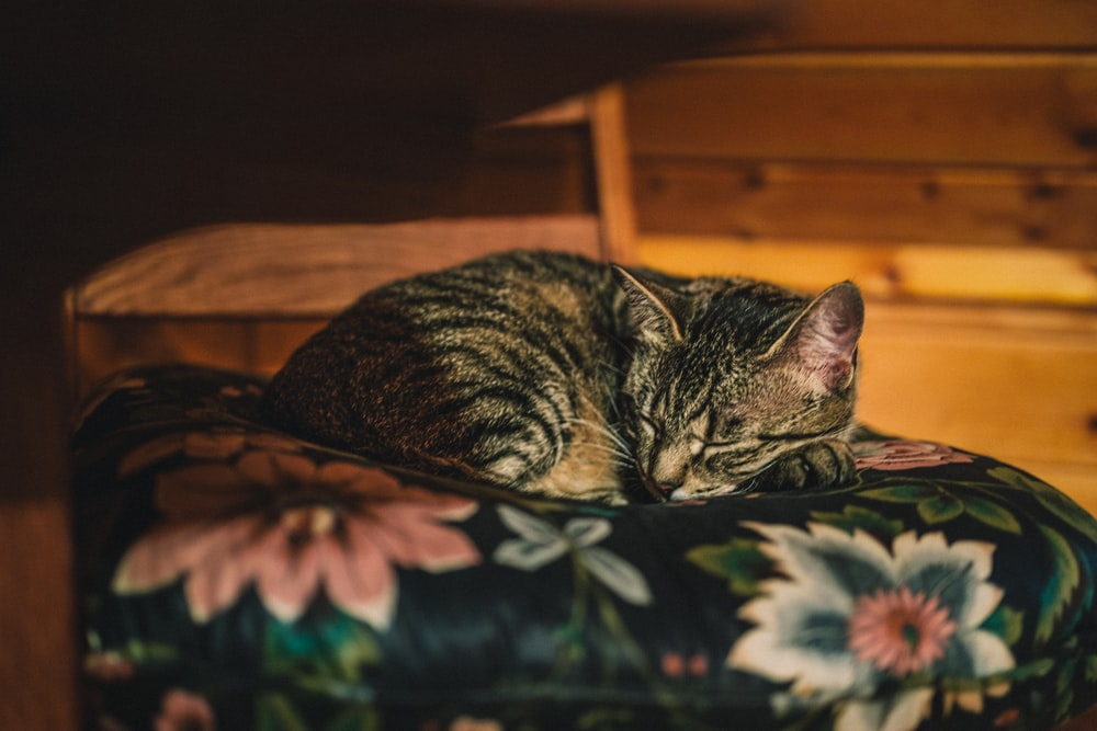 brown tabby cat lying on green and white floral textile