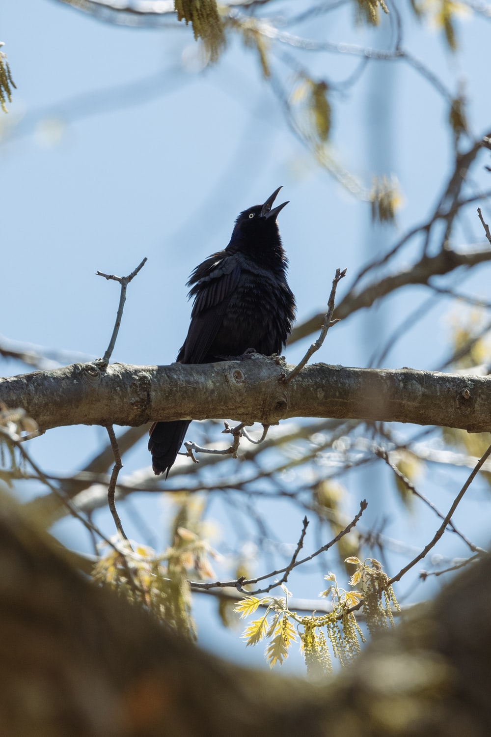 black crow perched on brown tree branch during daytime