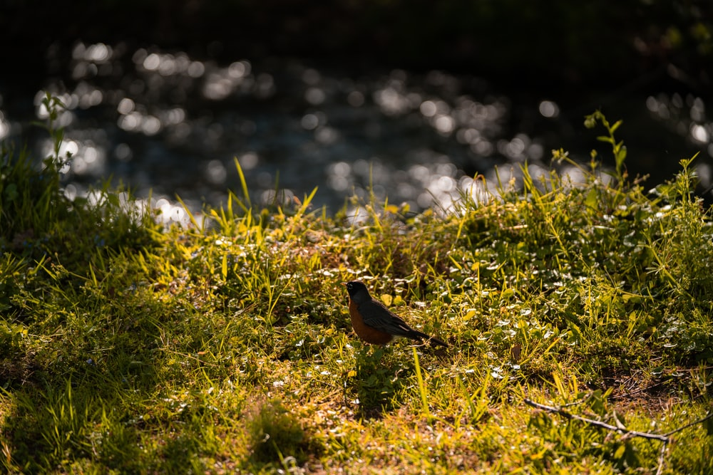 brown bird on green grass during daytime