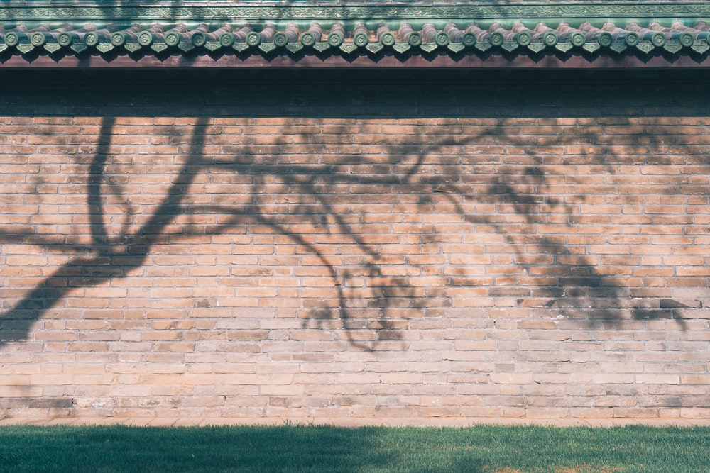 brown brick wall with shadow of tree during daytime