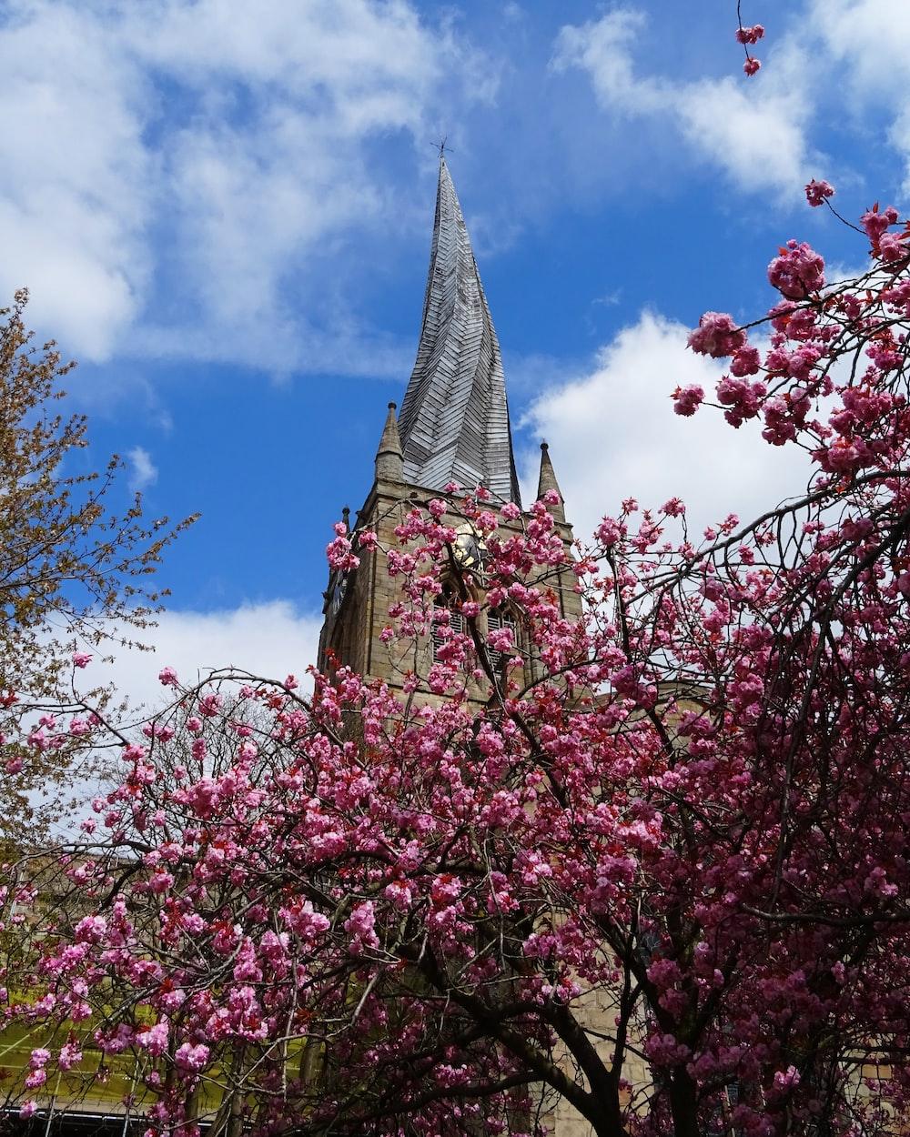 pink cherry blossom tree under blue sky