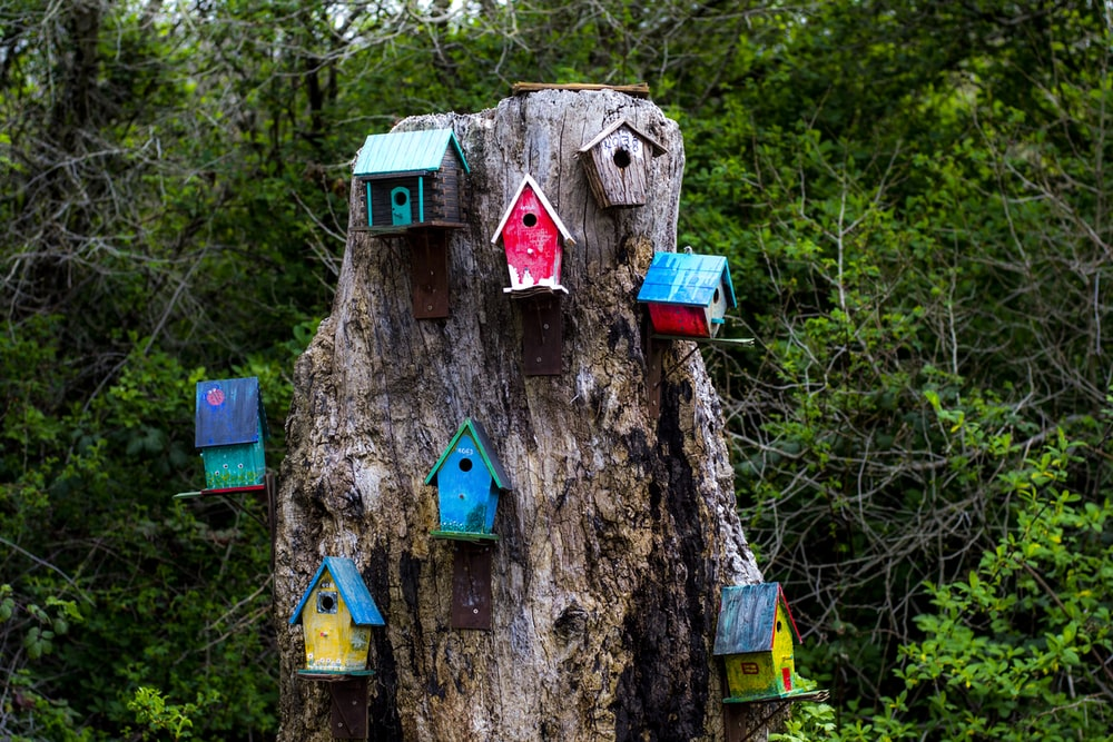 blue and brown wooden birdhouse on tree