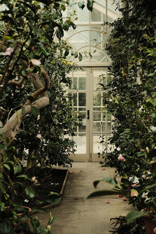 green plants on white wooden frame glass window