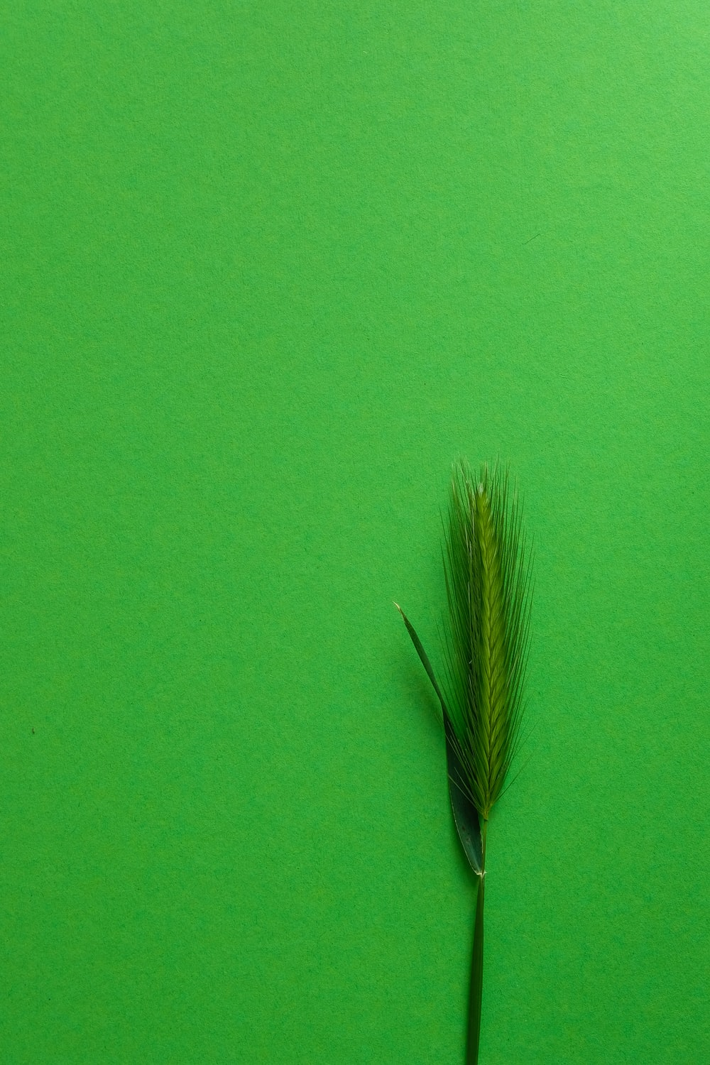 green and brown feather on green textile
