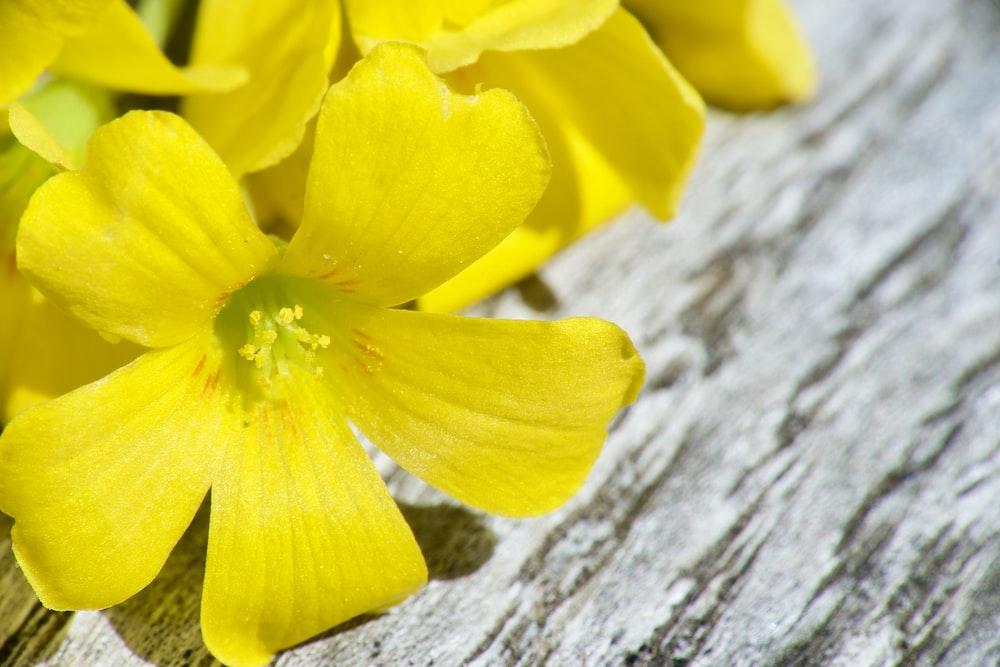 yellow flower on gray wood