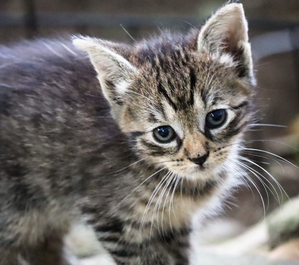 Have Against Abused Cats