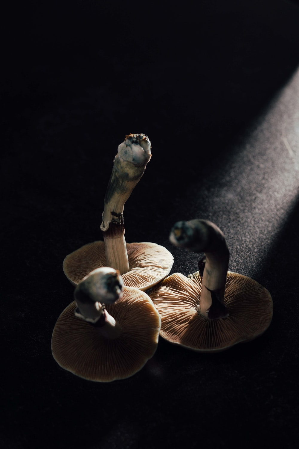 brown mushrooms on black surface