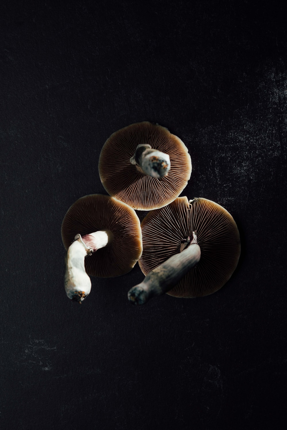 2 brown mushrooms on black textile