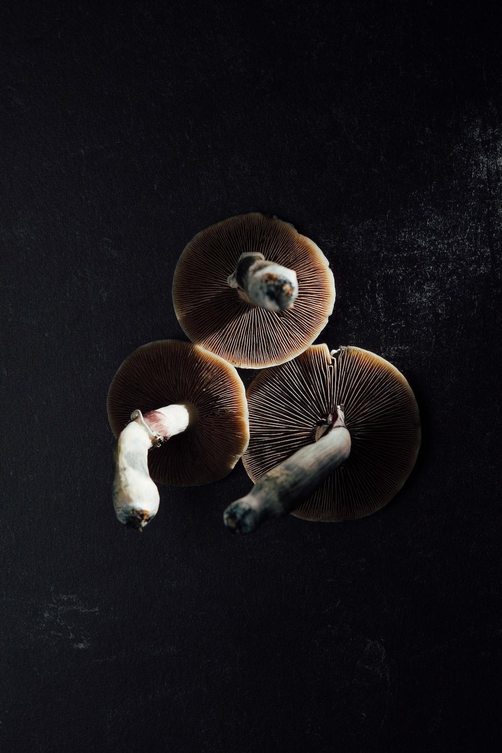 2 brown mushrooms on black textile