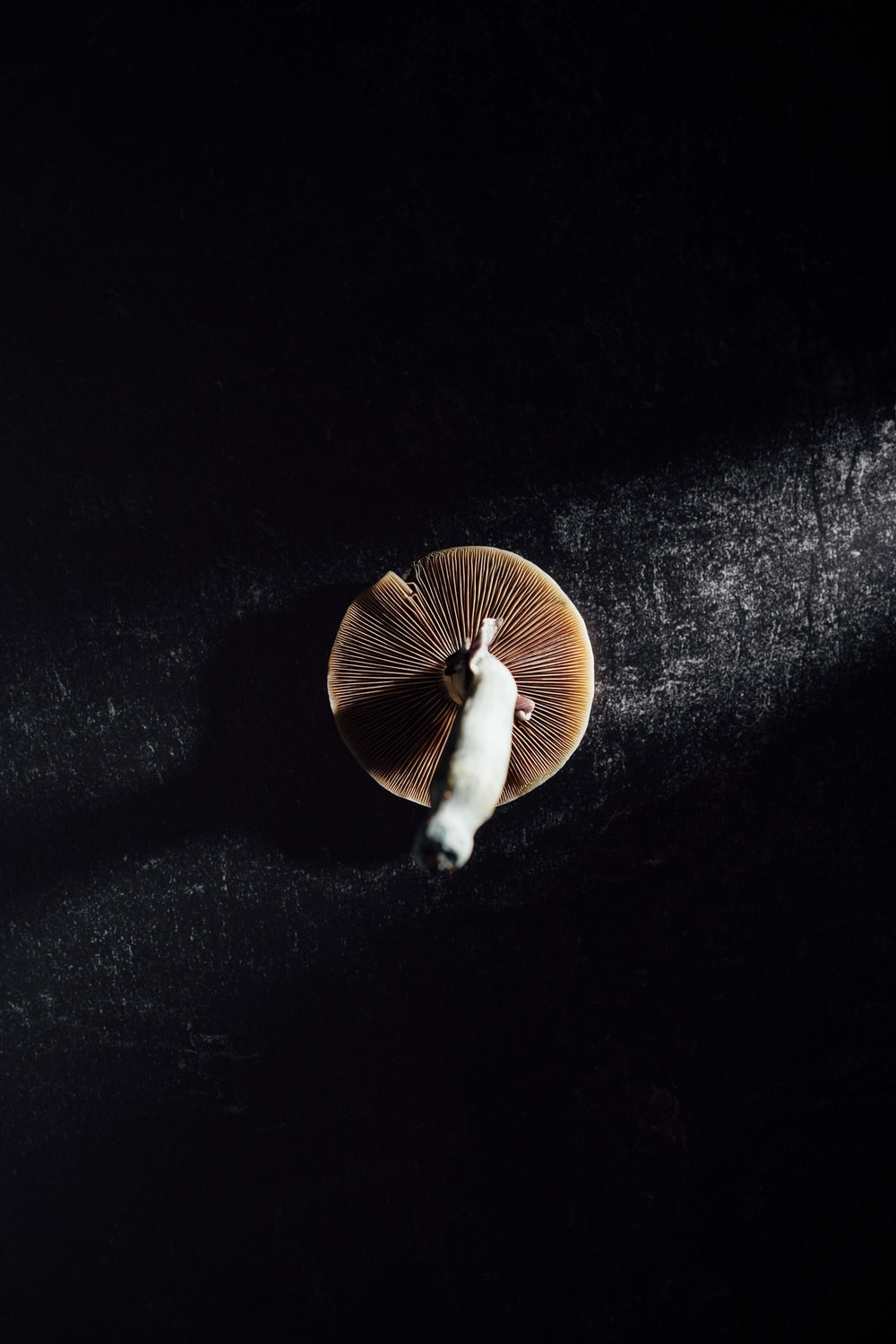 brown and white mushroom on black surface