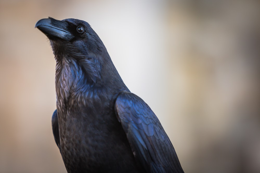 black bird in close up photography