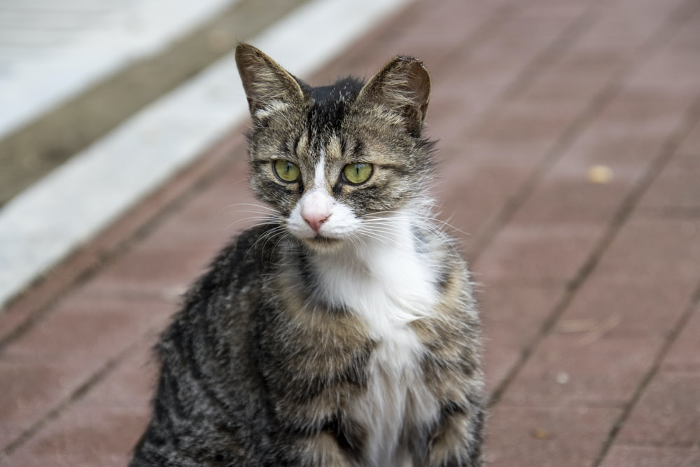brown tabby cat on brown brick floor